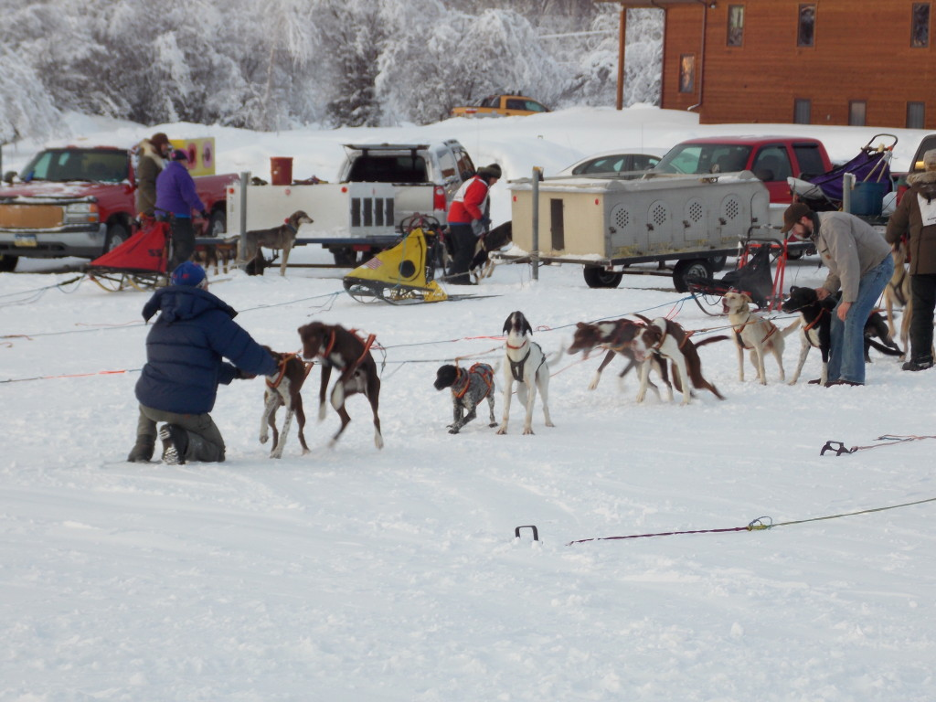 Dog teams ready to run